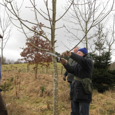 Practical woodland tasks