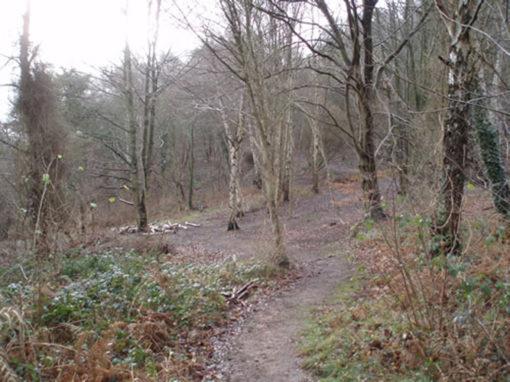 woods-2-500-675
