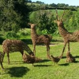 Willow stags