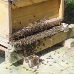 bee-keeping-2-150x150