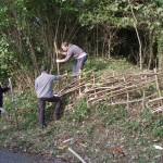 hedge laying P1010254-150x150