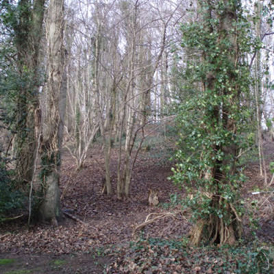 Woodland and Countryside Management